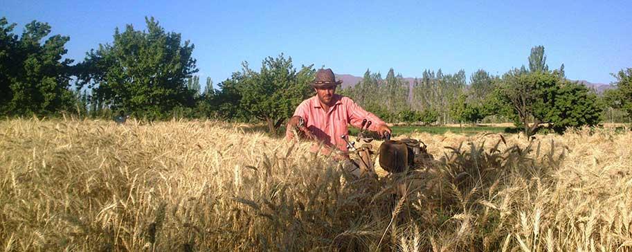 کشاورزی شهر دیزج دیز